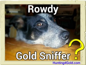 Gold sniffing dogs